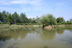coarse fishing pond 1