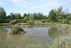 coarse fishing pond 2