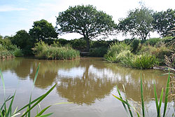 coarse fishing pond 3